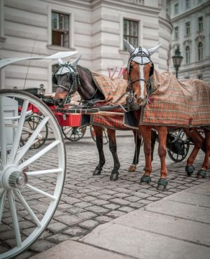 Don't you love the hats these horses are wearing for their carriage rides? Horses get cold too!!...