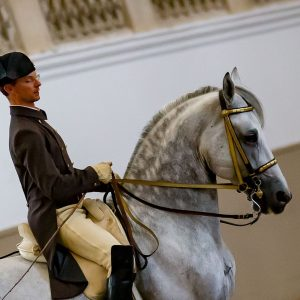 Rider Florian Zimmermann captured in a focused moment at the internal training in the riding hall at...
