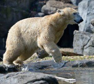 Ab ins Wochenende und ab in die Eisbärenwelt. 💖 Am Wochenende wartet ein ...