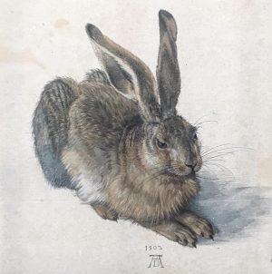 Albrecht Dürer Albertina Museum