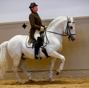 Awesome picture of today's performance - the Piaffe of rider Christian Bachinger and Maestoso Rustica captured at...