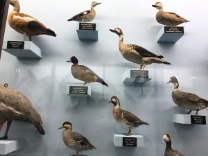 More assholes! NhM Naturhistorisches Museum Wien