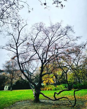 #vienna #stadtparkwien #falltime #colorful #autumn4igers #autumnvibes🍁 #wienliebe #autumn #autumncolors #autumnleaves #nature #fall #autumnphotography #leaves #naturephotography #loveautumn #meinherbstzauber...