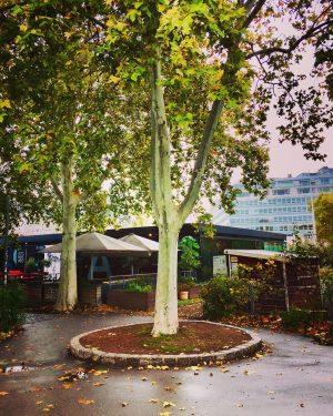 😍#november🍁 🍃🍂🌿 #strollingaround #karlsplatzwien #heueramkarlsplatz #herbst🍁 #autumnvibes🍁 #fall🍁 #treesofinstagram #bäumesindtoll #wien🇦🇹 #wienliebe #wienstagram #meinwien #wien_love #vienna🇦🇹 #ilovevienna...