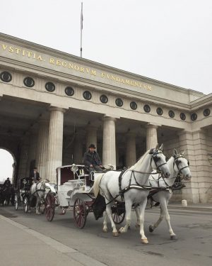 Sewaktu di Vienna selalu berpapasan dengan kereta kuda seperti ini. Kudanya rata rata berwarna hitam atau putih....