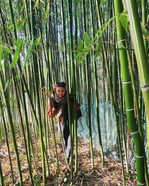 Im Dschungel.🎋#triedtohide Botanischer Garten Belvedere