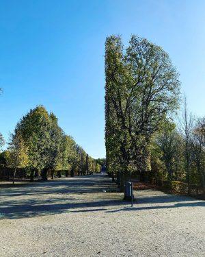 #autumn #schönbrunn #wien #igersvienna #emolution #karriere #job #jobsuche #karrierecoach #10schrittezumtraumjob #architecture #trees #bäume #park Schönbrunn Garten