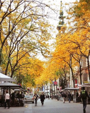 Same street, different season. Which season do you like more - Autumn or Winter? Mariahilfer Straße divides...