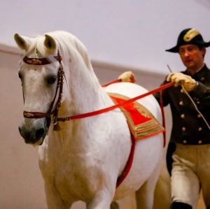 Nothing to add to this captured moment of stallion Siglavy Aquileia and chief rider Rudolf Rostek on...