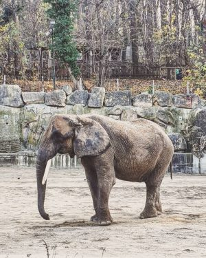 Spending your day at the zoo is always a good idea! #zoo #zooschönbrunn ...
