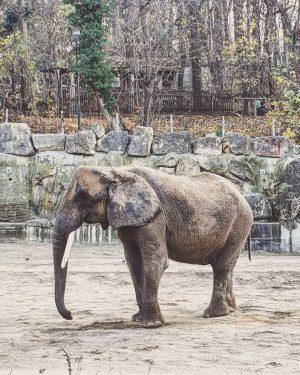 Spending your day at the zoo is always a good idea! #zoo #zooschönbrunn #zooviennaschönbrunn #elephant #sunday #sundayvibes...