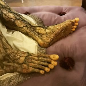 How much do you know about your 👣? 🤔 Anatomical wax replica of the collection at the...