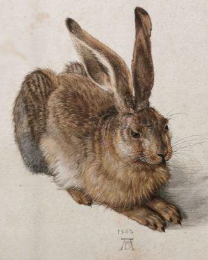 #albrechtdürer #dürer #albertina #wien #vienna #feldhase Albertina Museum