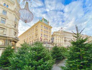 Weihnachtsbaum-Wald mitten in der Wiener Innenstadt 🎄🙂 #natale #weihnachtsbaum #tannenbaum #weihnachten #weihnachtszeit #weihnachtsdeko #wald #bosco #baum #bäume...
