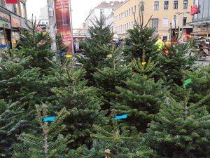 Die Favo verwandelt sich langsam in einen Nadelwald 🌲🎄🌲🎄🌲 #FavoritenStraße #WeihnachtsShoppingWahnsinn #TooManyPeople #ViennaX #WeihnachtenInFavoriten #Wien10 #WienX #Vienna10...