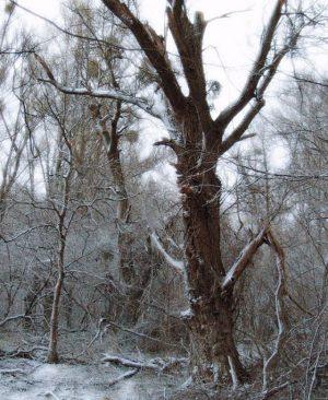 Über Nacht hat ein wenig Schnee den Auwald angezuckert. #npdonauauen #donauauen #lobau #nationalpark ...