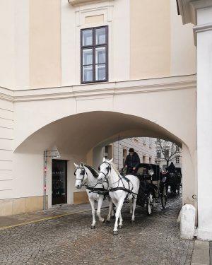 Durch Raum und Zeit #wien#vienna#austria #innerestadt#palaiscollalto #igersvienna#igersaustria #fiaker#fiakerfahrt#horses #vienna_austria#meinwien #viennaclassics#visitvienna #streetsofvienna#visitvienna #europe_vacations#wienliebe #wiennurduallein#unserwien ...
