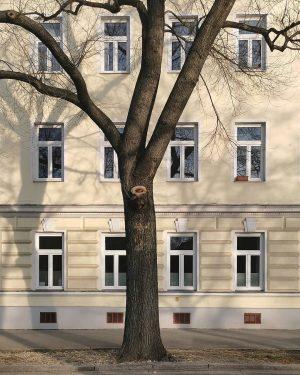Wohngemeinschaft #wien#vienna#brigittenau #donaukanal#meinwien #igersvienna#igersaustria #treelove#baum#baumliebe #fassadenliebe#fassade #facade#windowlove #fenster#tree#windows #ihaveathingforshadows #ghosttreesareforlovers #schöneswien#unserwien #streetsofvienna #vienna_austria#stadtwien ...