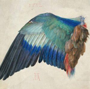 Albrecht Dürer, Wing of a Roller Mavi Kuzgunun Kanadı (1512) Boyutu : 19,6 cm x 20 cm...