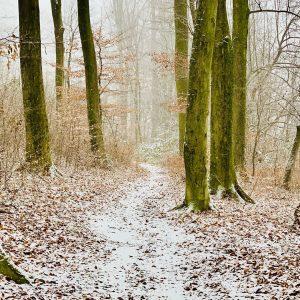 Endlich ein bisserl weiß im Wienerwald. ——————————— #wienerwald #singletrail #winter2020 #forest #tree #trail ...