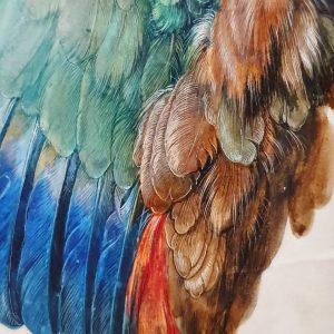 Flügel einer Blauracke, Albrecht Dürer #wien #österreich #vienna #austria #albertinamuseum #dürer #rinascimento #art #travel Albertina Museum