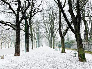 Prater Hauptallee mit etwas Schnee #streetphotography #streetphoto #streetphotographyvienna #igersvienna #igersaustria #vscocam #vscoaustria #vienna ...