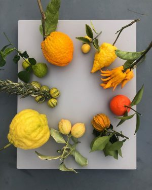 a few samples of viennese citrus fruits - each of them reflects a different complex taste -...