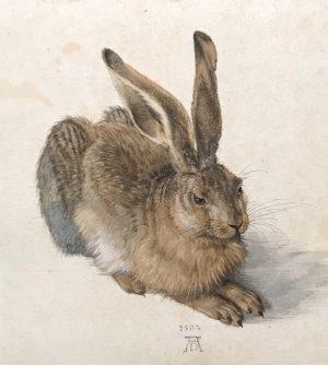 Young Hare Super Star #dürer Albertina Museum