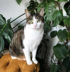 Madame am Tivan. #cat #catcontent #catsofinstagram #katze #animals #pets #wien #vienna #latergram #millie #igersvienna #fensterblatt #monstera #latergram...