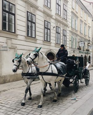 Vienna city's vibes . . . . . #artofvisuals #citybestpics #agameoftones #city_explore #illgrammers ...