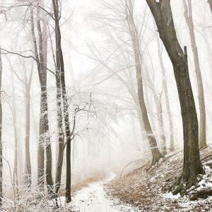 3 Hügel Wanderung 🏔🏔🏔 #wanderninwien #hermannskogel #sophienalpe #wilhelminenberg #winter #wandernmithund #endlichschnee