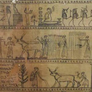 การเกษตรของอียิปต์โบราณ Papyrusmuseum der Österreichischen Nationalbibliothek