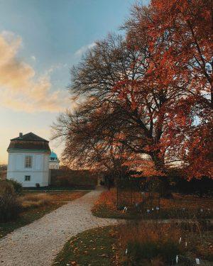 🍂 #goldenhours Botanischer Garten Belvedere