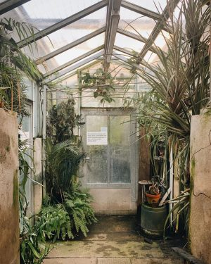 The discreet charm of the old greenhouse 💚 . . . ##urbanjunglebloggers #indoorplants #garden_styles #gardenlove #gardeninspiration #indoorgarden...