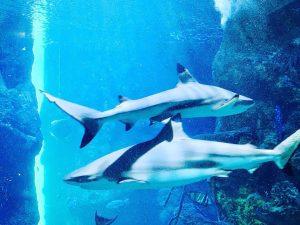 상어 이모티콘은 있네 🦈 _ _ _ #hausdesmeeres #hausdesmeereswien @hausdesmeeres #aquarium #stingray #austria #wien #vienna #viennaaustria #오스트리아...
