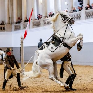 Stunning stallion Conversano Perletta and the Riders Bachinger (in front) and Zimmermann (in the back) executing the...
