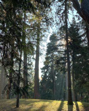 #vienna #viennalife #lunchbreak #lovely #sunnyday #winter #austria #nature #green Botanischer Garten Belvedere