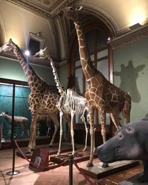 Životinje u vitrinama. NhM Naturhistorisches Museum Wien