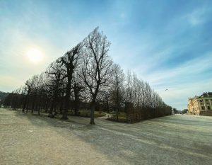 #schönbrunn #park #wien #igersvienna #stadtwien #emolution #karrierecoach #jobcoach #karriere #jobsuche #neuorientierung #10schrittezumtraumjob Schönbrunn