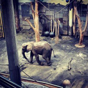 #zoo #elefant #schönbrunn #love Tiergarten Schönbrunn