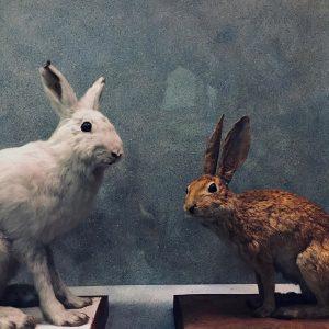 @nhmwien #nhm #vienna #nhmwien #animals #museum #history #education #educationmatters #science #nature NhM Naturhistorisches ...