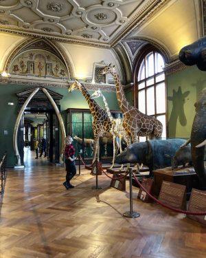 #вена #vienna NhM Naturhistorisches Museum Wien
