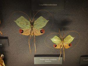 Vienna Night Natural History Museum - Viena Noche Museo de Historia Natural - ...