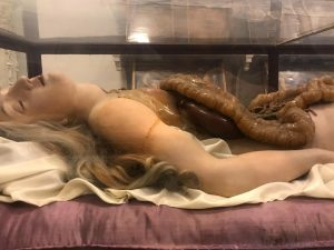 From the historical collection of anatomical wax models at Josephinum. Josephinum