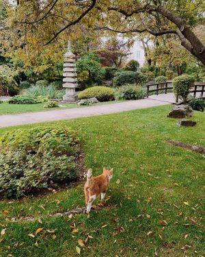 Сколько же у меня радости, когда встречаю котиков 😻 ведь их реже видишь на улице, чем собак......