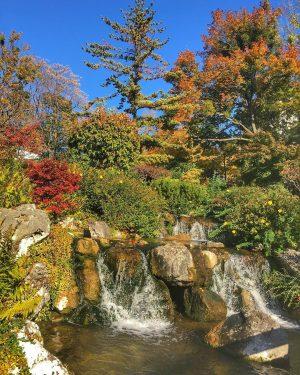 Autumn is a second spring when every leaf is a flower -Albert Camus #segatayapark #stadtwien #viennaautumn #viennaaustria...