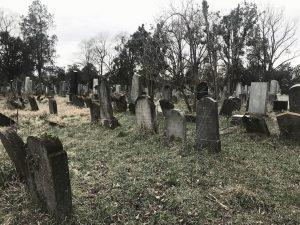 Hallöchen, heute gibt es mal kein Selfie Bild von mir, dafür ein Bild vom Zentralfriedhof in Wien...