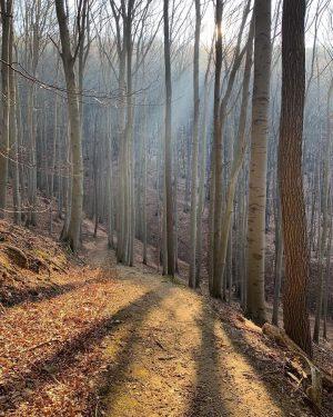 Erste Frühlingssonnenstrahlen im Wienerwald 🤩☀️ So sieht ein gelungener Start in die neue Mountainbikesaison aus! 🌳🚴🏻♂️ Seit...