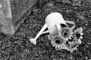 Friedhofsspazier #wienliebe #viennalove #wienanalog #analoguevibes #analogforever #shootfilm #filmisgood #filmisnotdead #analogphotography #kodakfilm #kodaktmax400 #rolleisupergrain #developing #nikonfm #nikoncamera #nikonculture...