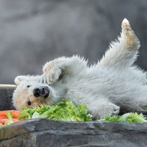 Heute übernahm Wiens Bürgermeister Michael Ludwig die Patenschaft für das Eisbären-Mädchen Finja. 💖 ...